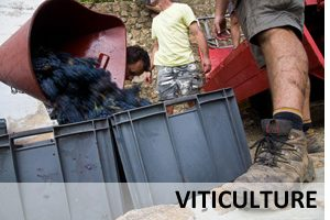 Reportage en viticulture