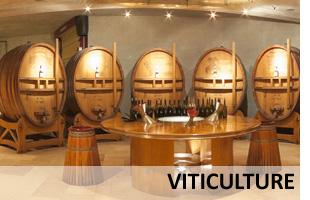Visite virtuelle d'une cave viticole