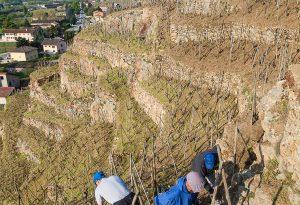 Domaine E. Guigal - Travail du sol dans La Mouline