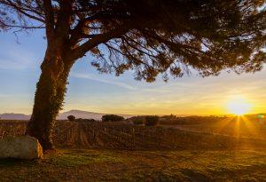 Nalys / Domaine E. Guigal - Lever de soleil en hiver