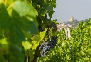 Nalys / Domaine E. Guigal -Vigne au printemps