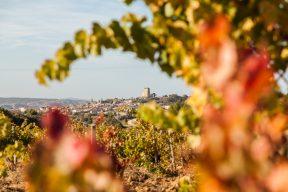 Nalys / Domaine E. Guigal -Vigne en automne